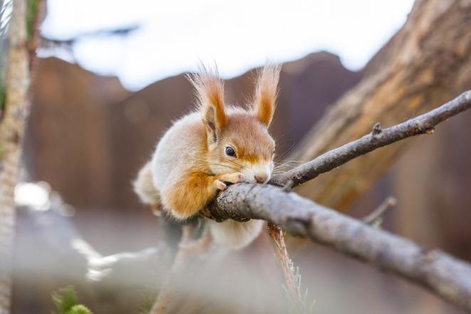 Spiksplinternieuw Het gedoe dat liefde heet (6): van eekhoorns, beren en mieren JO-03